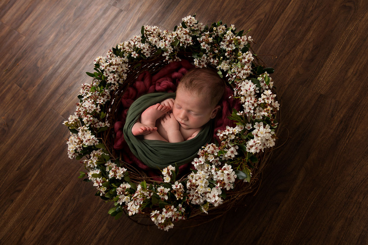 brisbane newborn photographer christmas floral wreath