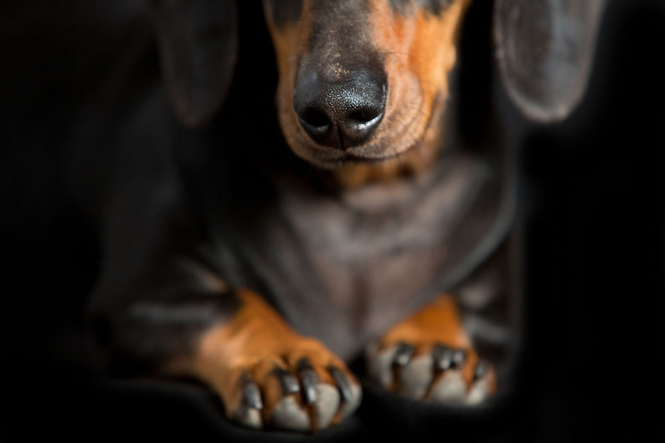 Brisbane Pet Photography