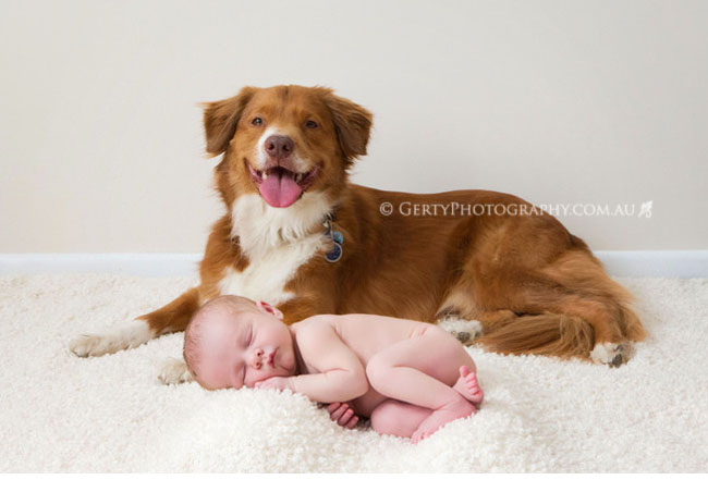 Nova Scotia Duck Tolling Retriever and newborn baby