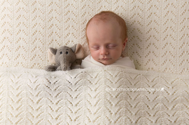 newborn photos knitted elephant