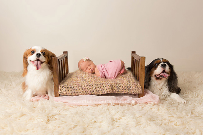 newborn and puppy photo