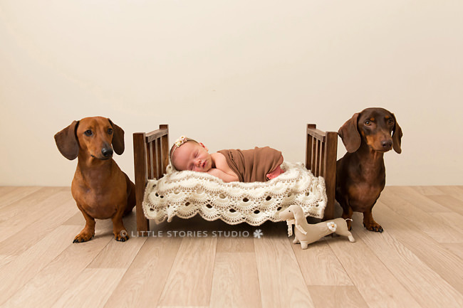baby and dachshunds newborn photo