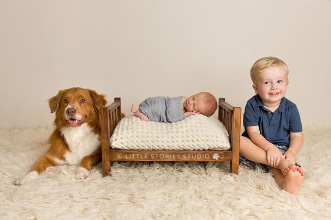 studio newborn photos with dog