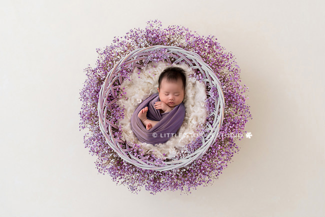 six week old baby newborn style photography brisbane